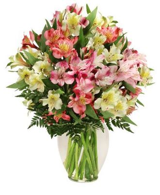 Picture of Alstroemeria Paradise