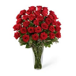 Why Red Roses Are So Popular