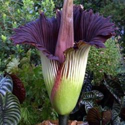 What is the Largest Flower?